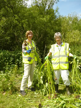 Photo of two ladies with stalks of balsam